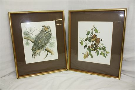 2 Framed and High Quality Prints by M.G. Loates of Birds and an Owl