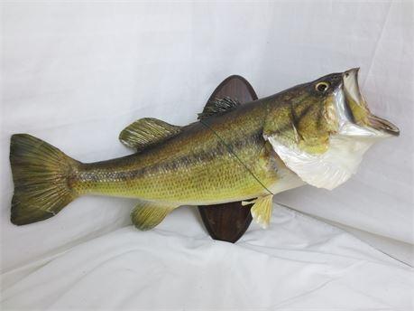 Large Taxidermy Largemouth Bass